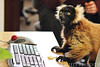 DISCOVER THE UNEXPECTED: LEMURS IN THE WORKPLACE? :