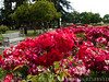 SAN JOSE MUNICIPAL ROSE GARDEN :